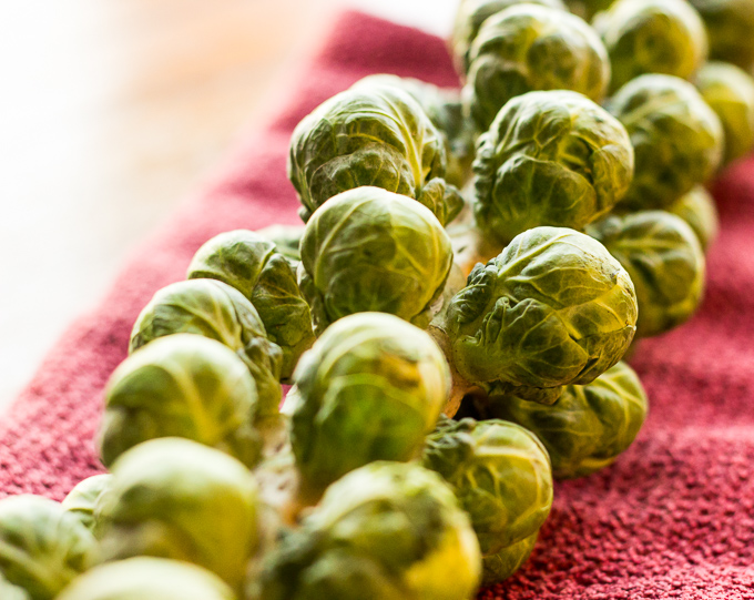 Raw brussels sprouts sitting on stalk